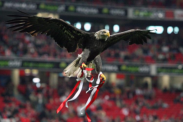 """Résultat de recherche d'images pour """"foto da aguia do Benfica"""""""